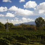 View From Lincourt Winery Looking Out